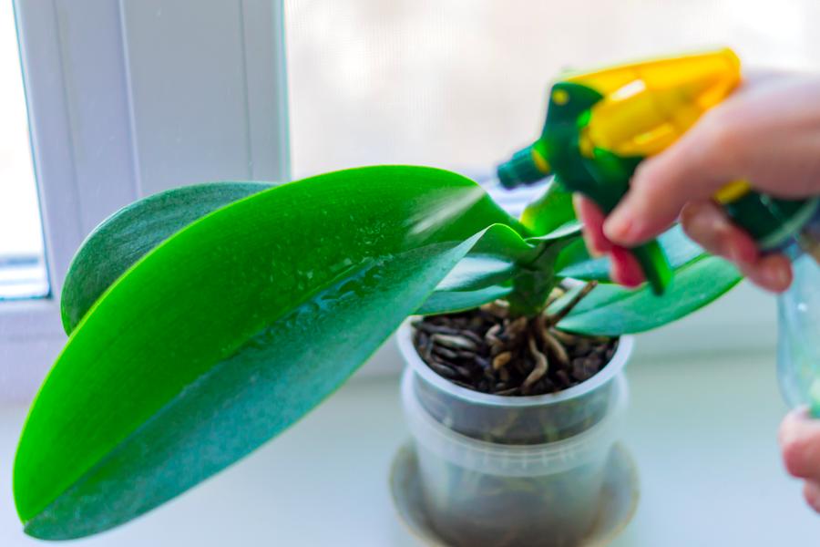 Facco protezione piante